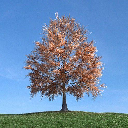 دانلود مدل درخت سه بعدی تری دی مکس وی ری آماده رندر 8350