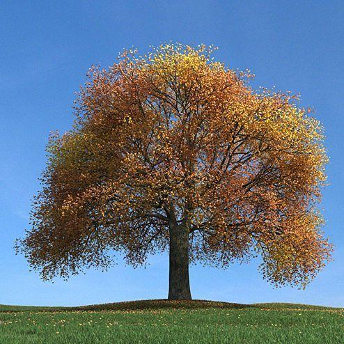 دانلود مدل درخت سه بعدی تری دی مکس وی ری آماده رندر 8353