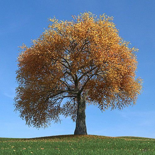 دانلود مدل درخت سه بعدی تری دی مکس وی ری آماده رندر 8355