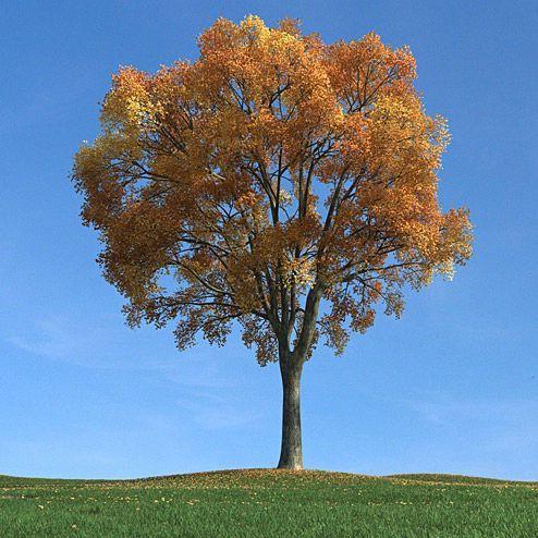 دانلود مدل درخت سه بعدی تری دی مکس وی ری آماده رندر 8357