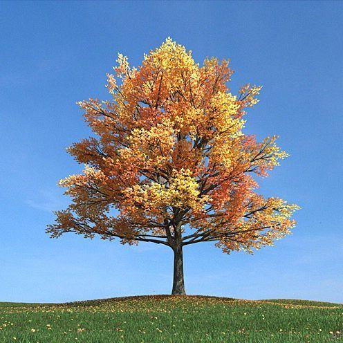 دانلود مدل درخت سه بعدی تری دی مکس وی ری آماده رندر 8358