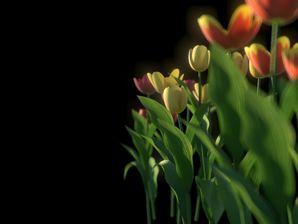 مدل گل باغ لاله