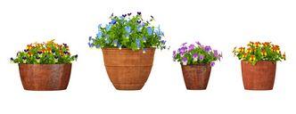 مدل گل باغ گلدان