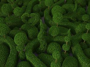 مدل درخت شمشاد باغ