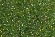 مدل گل باغ چمن