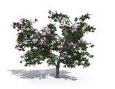 مدل درخت باغ گیاه بوته شمشاد
