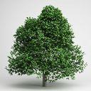 مدل درخت گیاه جنگل کاج