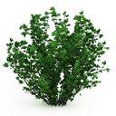 مدل باغ درخت بوته شمشاد گل کاج