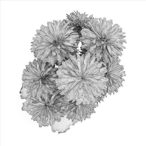 عکس+گل+ژرورا