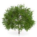 مدل درخت جنگل