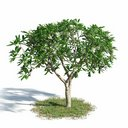 مدل سه بعدی درخت جنگل بوته چمن درخت تزئینی درخت بید
