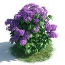 مدل سه بعدی گل گیاه بوته شمشاد