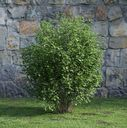 مدل سه بعدی درختچه درخت باغ شمشاد باغچه پارک سبزه چمن درخت کاج بوته