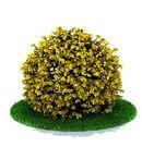 مدل درختان بوته شمشاد کاج بیدمجنون گلدان