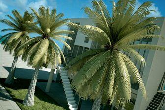 مدل درختان استوایی خرما شمشاد بوته تزئینی باغ گل گلدان