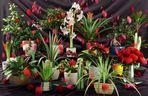 مدل گل گلدان تزئینی کاکتوس بنجامین