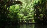 مدل درختان استوایی نخل