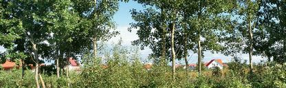 عکس کیفیت بالا منظره غروب ابر آسمان مزرعه درخت جنگل کوه دریاچه