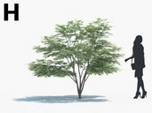 دانلود مدل سه بعدی درخت بوته شمشاد