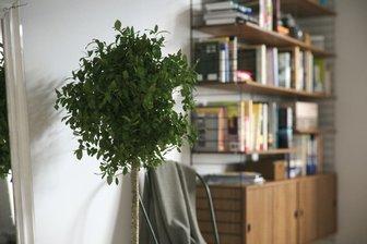 مدل گل گلدان بنجامین تزئینی گلدان سفالی استیل فلزی