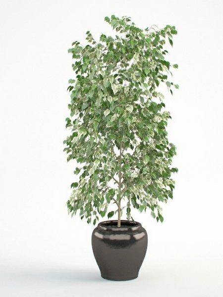 گل سر فلزی مدل S C001 noozdah com