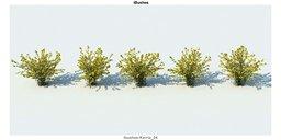 مدل سه بعدی شمشاد بوته درختچه لندسکیپ وی ری تری دی مکس