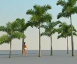 مدل سه بعدی درخت نخل خرما نارگیل وی ری تری دی مکس