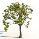 مدل سه بعدی درخت پاییز برگ زرد وی ری تری دی مکس