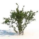 مدل سه بعدی درخت تابستان جنگل وی ری تری دی مکس