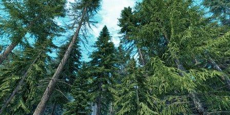 مدل سه بعدی درخت صنوبر کاج وی ری تری دی مکس