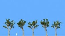 مدل سه بعدی درخت کاج بوته وی ری تری دی مکس