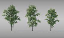 مدل درخت چمن گل بوته علف هرز کنده درخت جنگل علف کوهی هفت رندر آماده ویلا جنگل رودخانه چمنزار شرکت تجاری وسط شهر